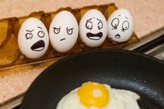 Cooking Fresh Eggs